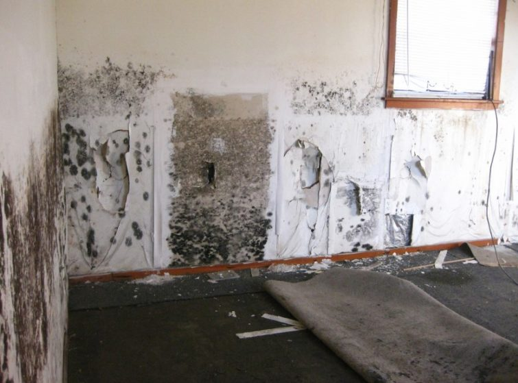 Mold In Bathroom Landlord Responsibility legal aspects of mold contamination - clean water partners