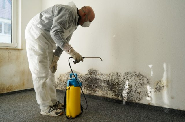 black mold testing information