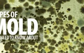 Identifying 37 Types of Mold Living around You