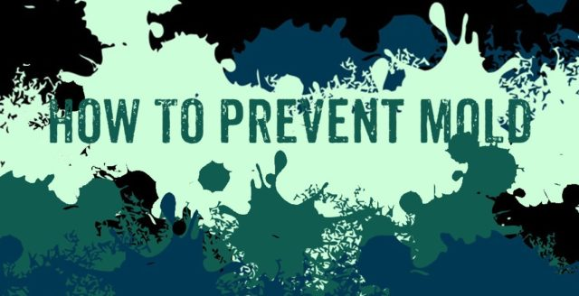 best way how to prevent mold