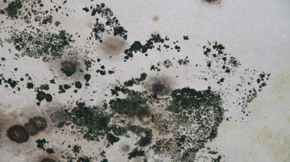 Toxic Black Mold Symptoms, Test, Removal & Health Effects