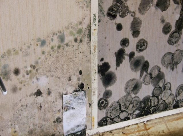 Black Mold Look Like On The Wall