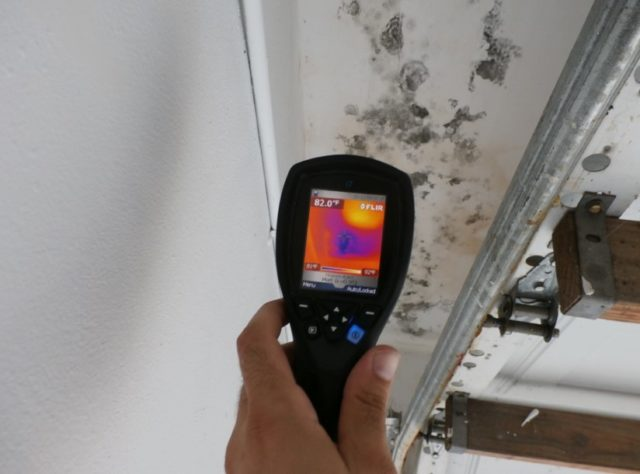 Mold & Termite Inspections
