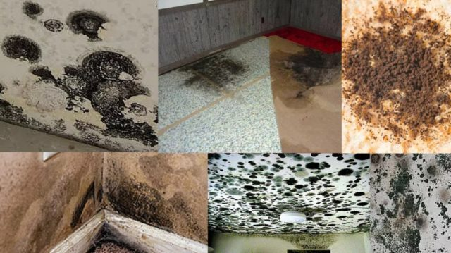 difference between mold vs mildew. Mold vs Mildew  What is the Main Difference Between Mold and Mildew