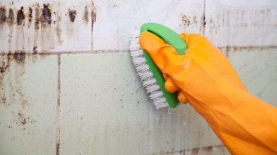 Does Vinegar Kill Mold? A Complete Guide to Get Rid and Prevent Mold from Coming Back