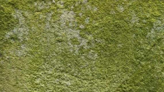Important Facts about Green Mold You Need to Know
