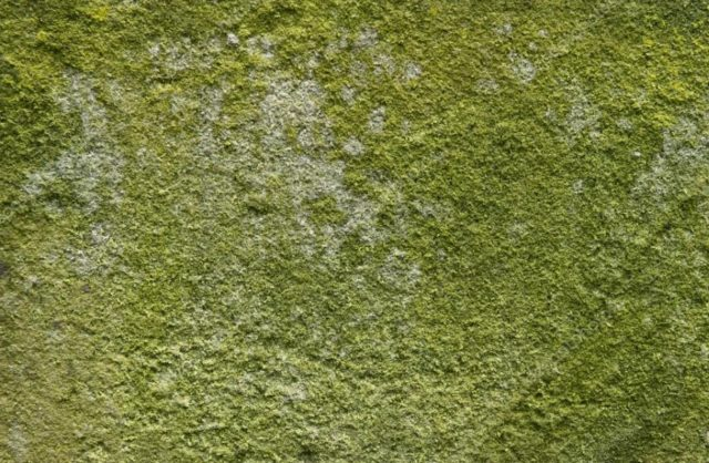 How to get rid of green mould on walls in bedroom www - Best exterior paint to prevent mold ...