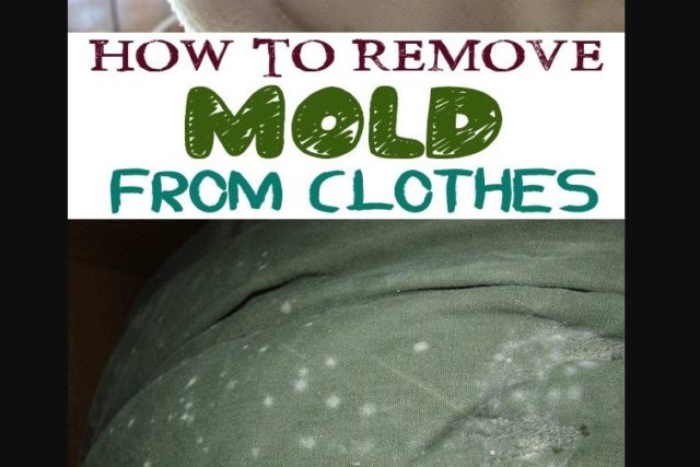 How To Get Mold Out Of Clothes Step By Guide