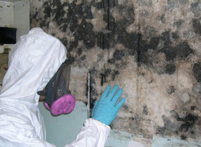 mold inspection and removal cost
