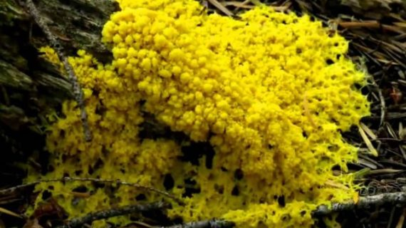 Yellow Mold Facts and Tips to Remove It