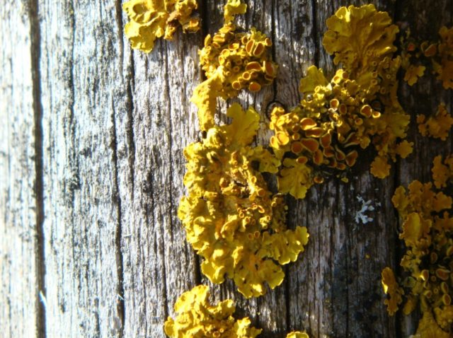 how to get rid of yellow mold on wood