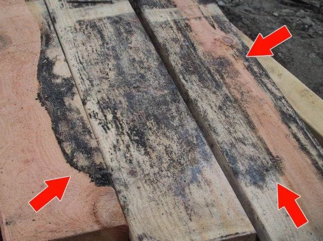 What Does Black Mold Look Like On Wood