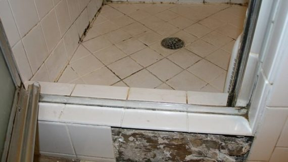 Be Aware of Black Mold in Shower to Save Your Life