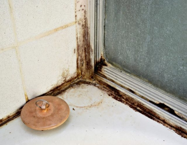 black mold in shower risks