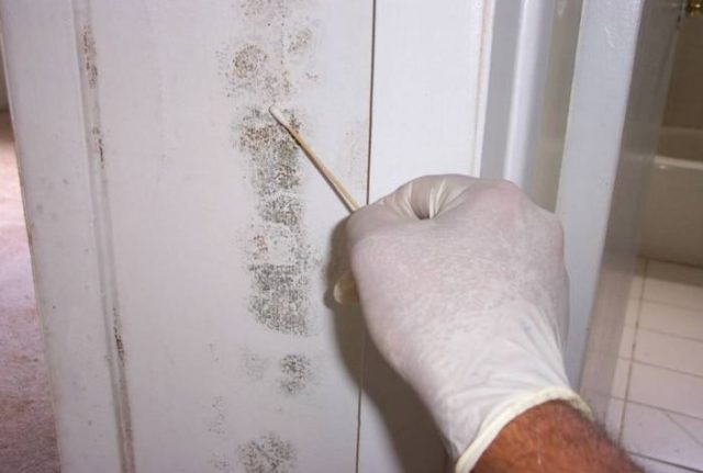 Prior Knowledge You Need To Have About Black Mold Test