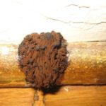 Brown Mold Facts: Appearance, Risks, and How to Remove It