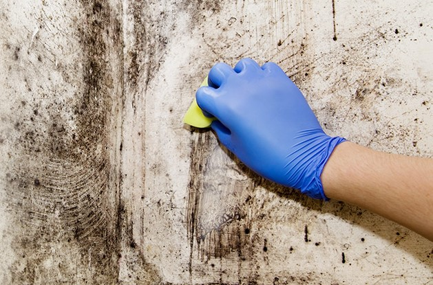 Does Bleach Kill Black Mold Well
