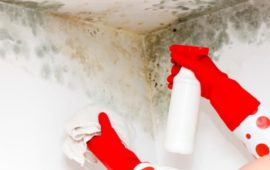Does Bleach Kill Mold? Find the Right Answer before You Get It Wrong