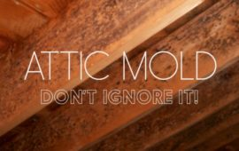 Mold in Attic: How to Stop Attic Mold Growth Permanently