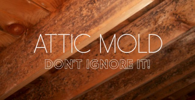 & Mold in Attic: How to Stop Attic Mold Growth Permanently