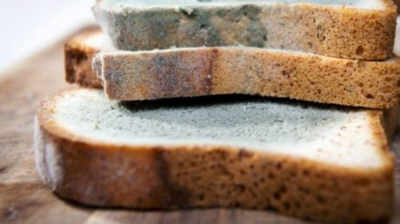 Mold on Bread: Here is What You Need to Know