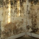 Some Easy yet Effective Ways to Take out Mold on Walls