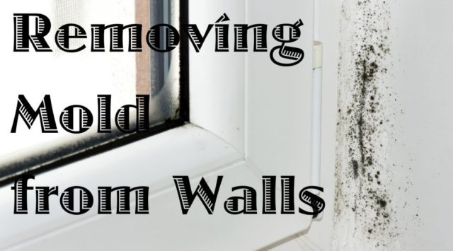 removing mold on walls