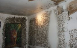 Let's Identify the Mold from Water Damage!