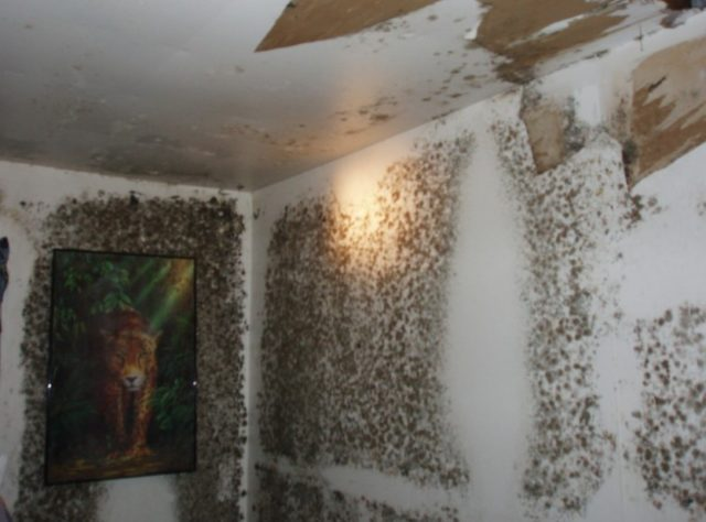 Let S Identify The Mold From Water Damage Clean Water