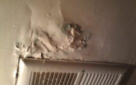 Is It Easy to Remove the Black Mold in Apartment?