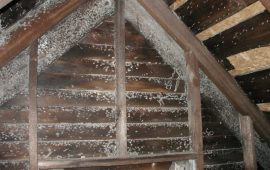 Finding Black Mold in Attic? Here's How to Remove It
