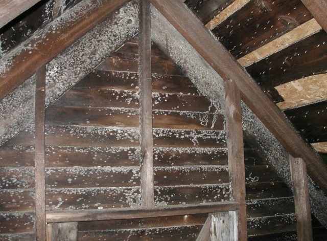 Finding Black Mold In Attic Here S How To Remove It