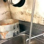 About The Black Mold in Your Dishwasher: Is It Safe?