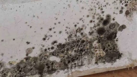 Is It Hard to Cope with Black Mold in Toilet?