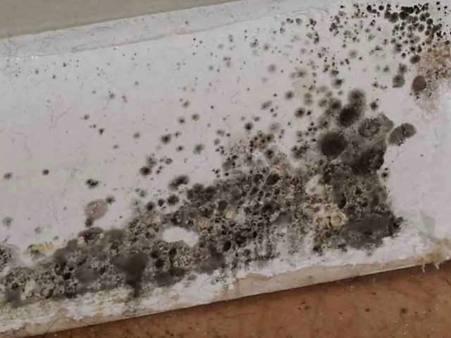 Is It Hard To Cope With Black Mold In Toilet