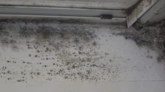 Simple Ways of Removing Black Mold on Windows