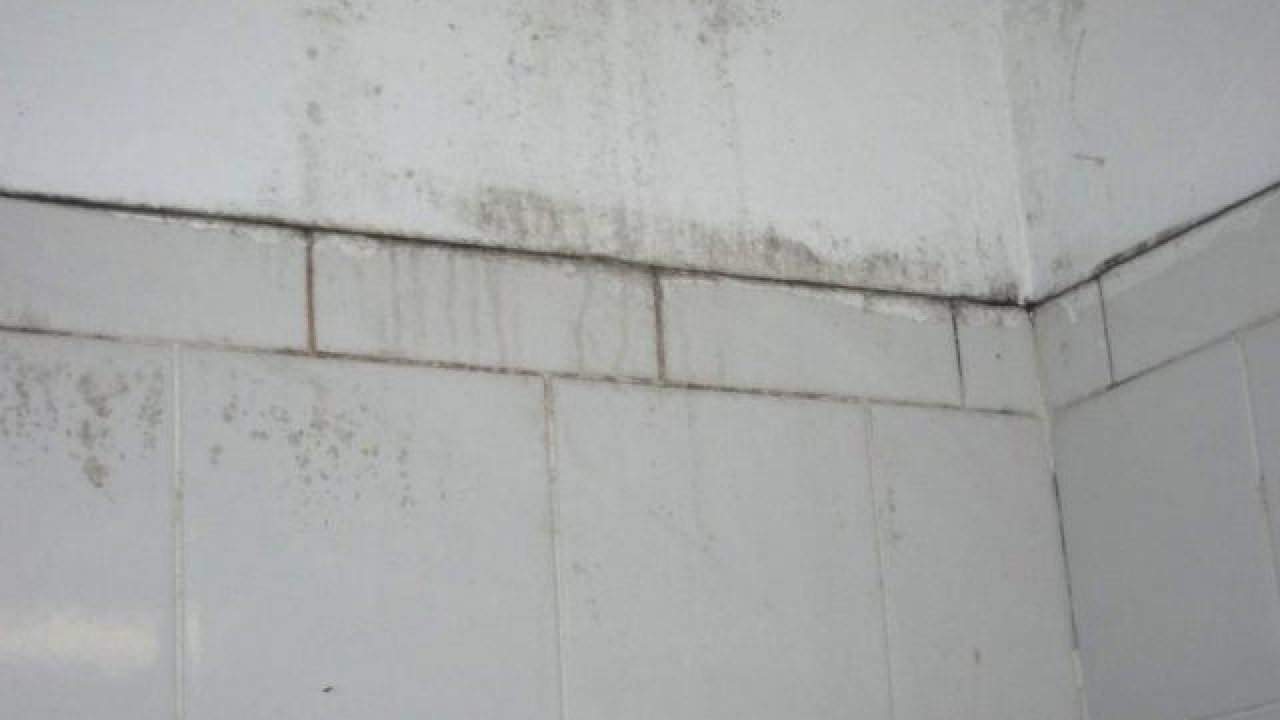 A Handful Of Ways To Remove Mold On Bathroom Walls Clean Water Partners