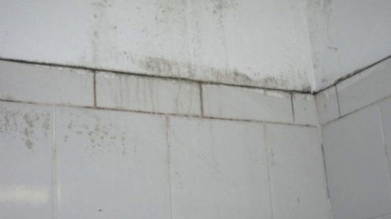 A Handful of Ways to Remove Mold on bathroom walls