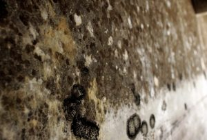 What Does Mold Smell Like? A Guide for Early Detection of