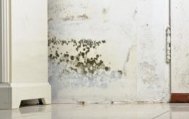 New How to Remove Mold From Basement Concrete Walls