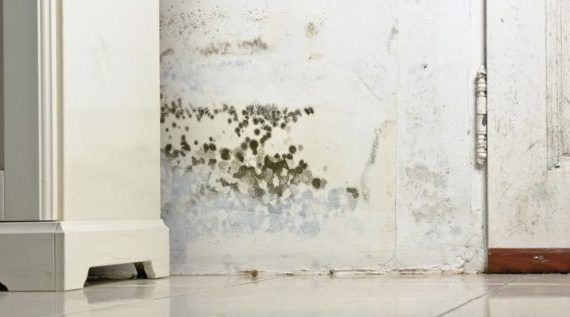 This Is How to Remove Mold Using Lysol
