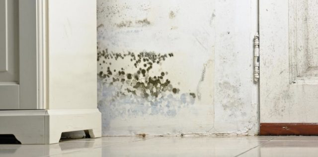 This Is How to Remove Mold Using Lysol - Clean Water Partners