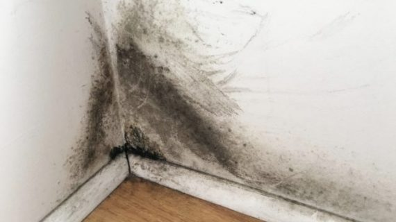 Black Mold on Drywall? Get Rid of It Right Away