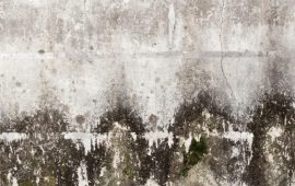 Toxic Black Mold Symptoms Test Removal Amp Health Effects