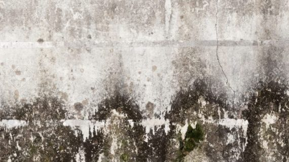 how to clean black mold from concrete walls