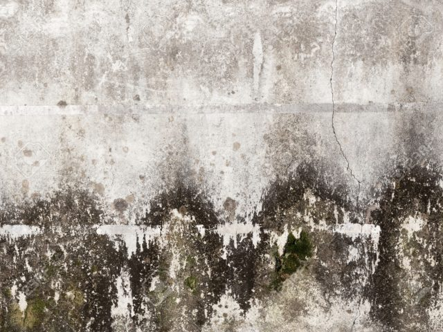 Easy Steps To Discard Black Mold On Concrete Clean Water