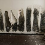 Signs of Black Mold in Your Home