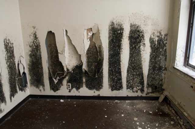 signs of black mold at home